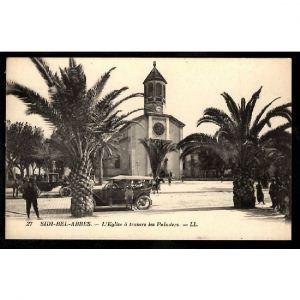 SIDI BEL ABBES - L'Eglise à travers les Palmiers